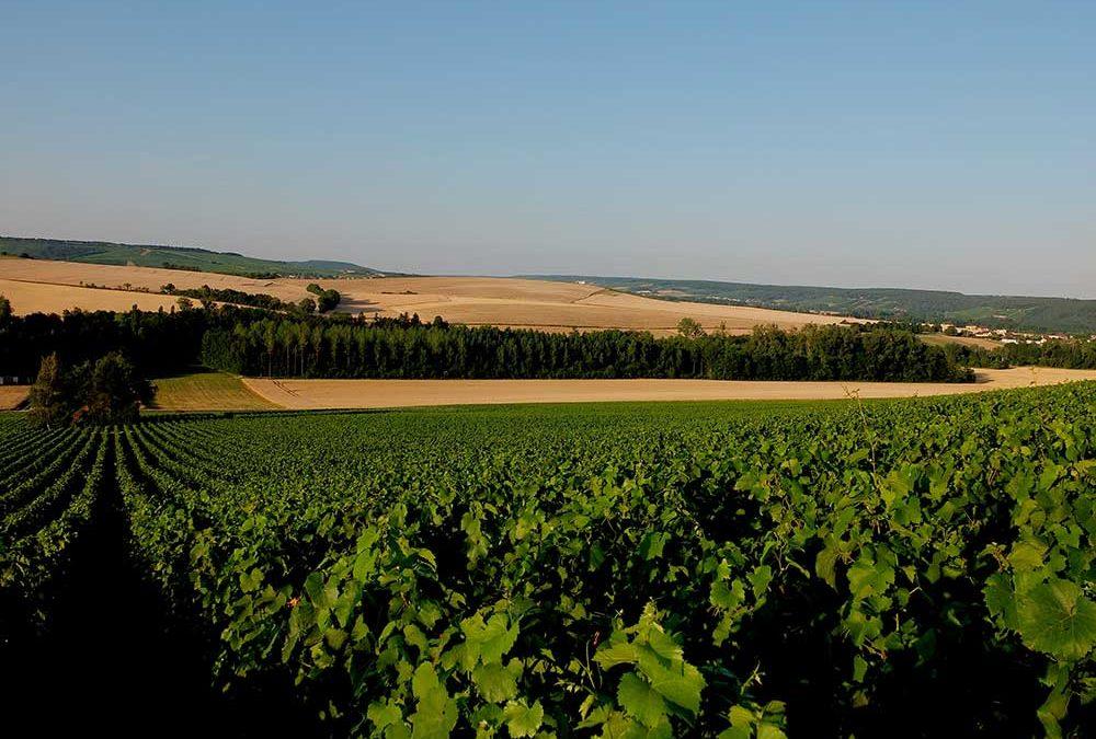 Randonnée au cœur du vignoble-Visite-Dégustation